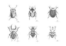 Day home Beetles Posters 6pcs Papper 30x40 cm  Vit/Svart