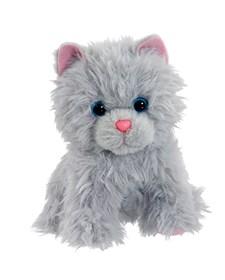 Scruffy Husdjur, Grå Katt, Scruffies