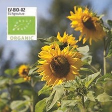 Solros, Jätte-, hög, gul, Organic