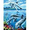 Royal & Langnickel Måla Efter Nummer Delfiner 33,1x24,1 cm