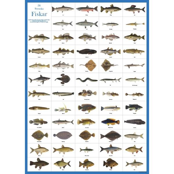 Svenska fiskar affisch  K. Hjelm Förlag AB - barnrumsdekoration