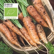Morot, Sommar-, Berlicum 2, Organic