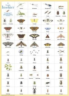 Svenska insekter affisch