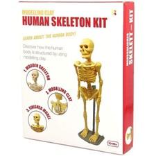 Mänskligt skelett, Modellera kit, Keycraft