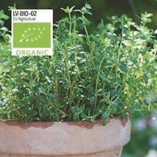 Timjan, Krydd-, German Winter, Organic