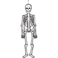 Skelett, H: 120 cm, 300 g, 1 st.
