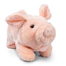 Playful Piggy