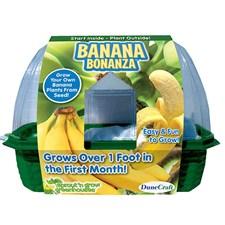 Grow Your Own Banana Bonanza