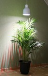 Växtarmatur SAGA för LEDlampor, Vit